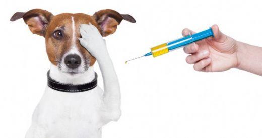 kuduz aşısı kaç yıl korur